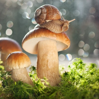 Secrets of successful mushroom hunting !